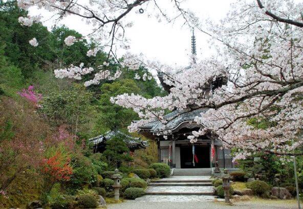 花の寺「如意寺」